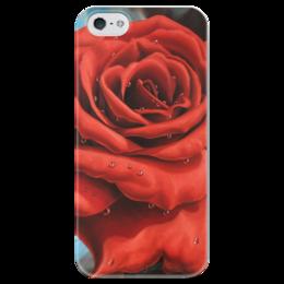 """Чехол для iPhone 5 глянцевый, с полной запечаткой """"Красная роза"""" - арт, цветы, red, rose, роза"""