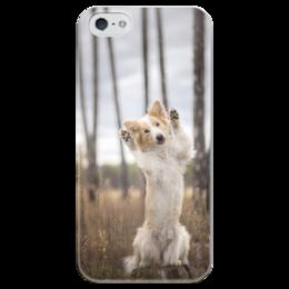"""Чехол для iPhone 5 глянцевый, с полной запечаткой """"Бордер-колли"""" - собака, колли, бордер-колли, бордер"""