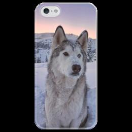 """Чехол для iPhone 5 глянцевый, с полной запечаткой """"Хаски"""" - пес, глаза, гетерохромия, зима, горы"""