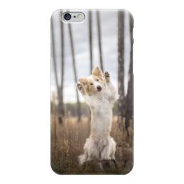 "Чехол для iPhone 6 глянцевый ""Бордер-колли"" - собака, колли, бордер-колли, бордер"