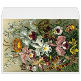 """Конверт большой С4 """"Орхидеи (Orchideae, Ernst Haeckel)"""" - цветы, картина, орхидея, красота форм в природе, эрнст геккель"""