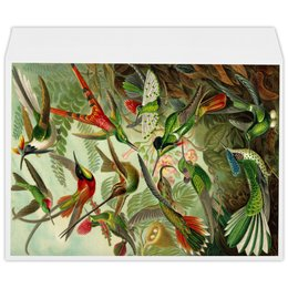 """Конверт большой С4 """"Колибри (Trochilidae, Ernst Haeckel)"""" - 8 марта, колибри, день матери, красота форм в природе, эрнст геккель"""