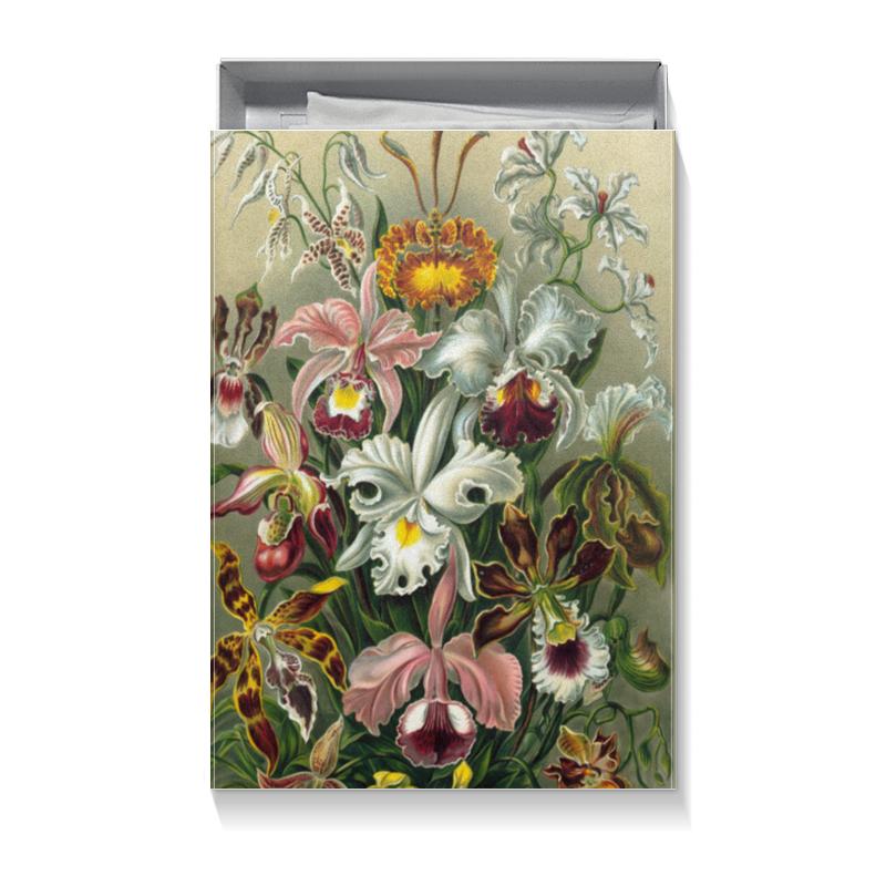 Коробка для футболок Printio Орхидеи (orchideae, ernst haeckel) коробка для кружек printio любимой девушке орхидеи