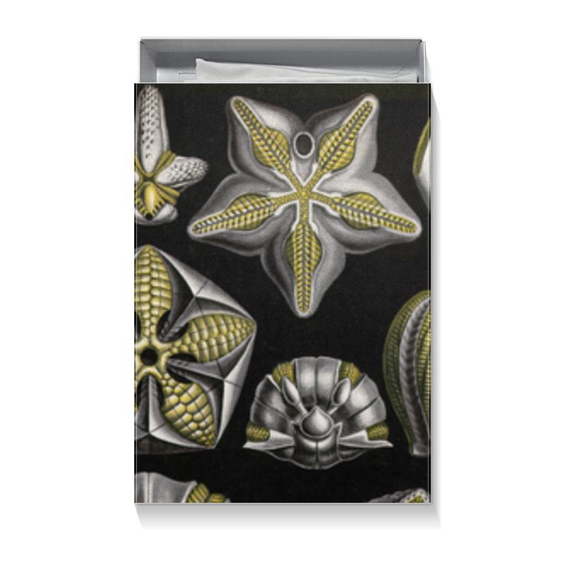 Коробка для футболок Printio Бластоидеи (blastoidea, ernst haeckel) юбка в складку printio blastoidea ernst haeckel