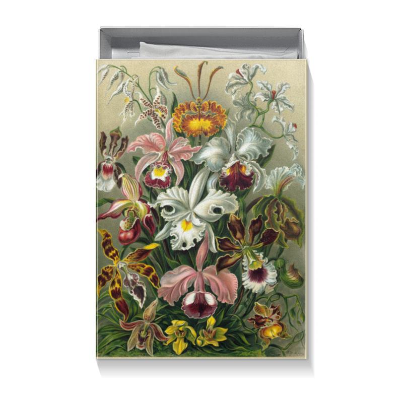 Коробка для футболок Printio Орхидеи (orchideae, ernst haeckel) цветной тм орхидеи
