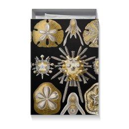 """Коробка для футболок """"Echinidea (Эхинидея), Ernst Haeckel"""" - новый год, картина, биология, красота форм в природе, эрнст геккель"""