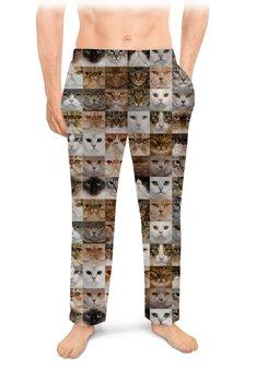 """Мужские пижамные штаны """"КОШКИ. МАГИЯ КРАСОТЫ"""" - стиль, глаза, фото, красота, кошки"""