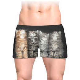 """Трусы мужские с полной запечаткой """"Four kittens"""" - кот, животные, котенок, кошки, котята"""