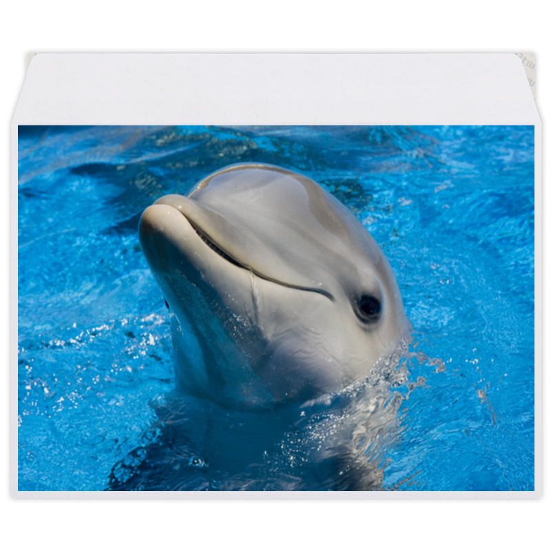 Конверт средний С5 Printio Дельфин 1 все цены