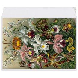 """Конверт средний С5 """"Орхидеи (Orchideae, Ernst Haeckel)"""" - цветы, картина, орхидея, красота форм в природе, эрнст геккель"""