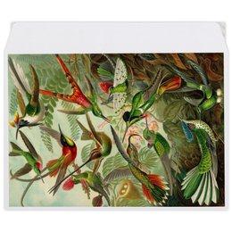 """Конверт средний С5 """"Колибри (Trochilidae, Ernst Haeckel)"""" - 8 марта, колибри, день матери, красота форм в природе, эрнст геккель"""