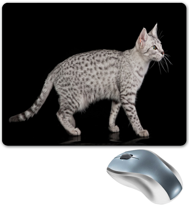 Коврик для мышки Printio Серая кошка коврик для мышки printio кошка в лучах ссср