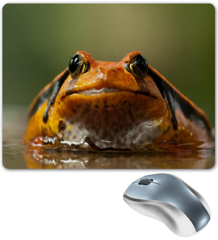 Printio Жаба в воде жаба 763