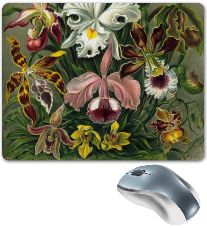 Коврик для мышки Printio Орхидеи эрнста геккеля кружка цветная внутри printio любимой маме орхидеи эрнста геккеля