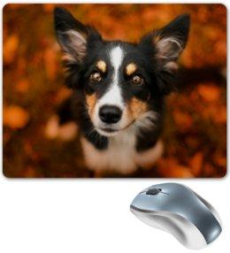 """Коврик для мышки """"Бордер-колли"""" - собака, колли, бордер-колли, листья, осень"""