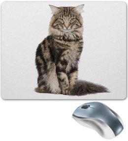 "Коврик для мышки ""Милый пушистый кот      "" - кот, кошка, котэ, алина макарова"