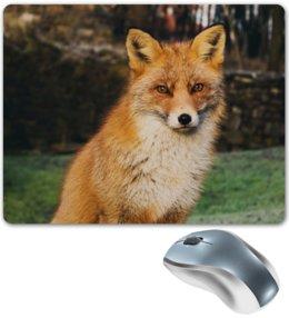"""Коврик для мышки """"Лиса """" - животные, лиса, рыжая лиса, хитрая лиса, красивая лиса"""