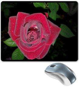 """Коврик для мышки """"Алая роза"""" - цветы, роза, алая роза, красная роза, чёрный фон"""