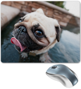 "Коврик для мышки ""Cool DOG"" - dog, pug, мопс, cute, funny"
