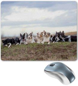 "Коврик для мышки ""Бордер-колли"" - собака, колли, бордер-колли, бордер"