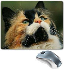 """Коврик для мышки """"КОШКИ. МАГИЯ КРАСОТЫ"""" - кошка, стиль, красота, яркость, арт фэнтези"""