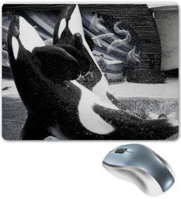 """Коврик для мышки """"Играющая парочка касаток"""" - пара, дельфины, алина макарова, касатки"""