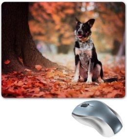 "Коврик для мышки ""Бордер-колли"" - листья, осень, собака, колли, бордер-колли"