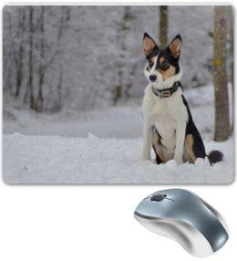 """Коврик для мышки """"Бордер-колли"""" - собака, колли, бордер-колли, зима, снег"""