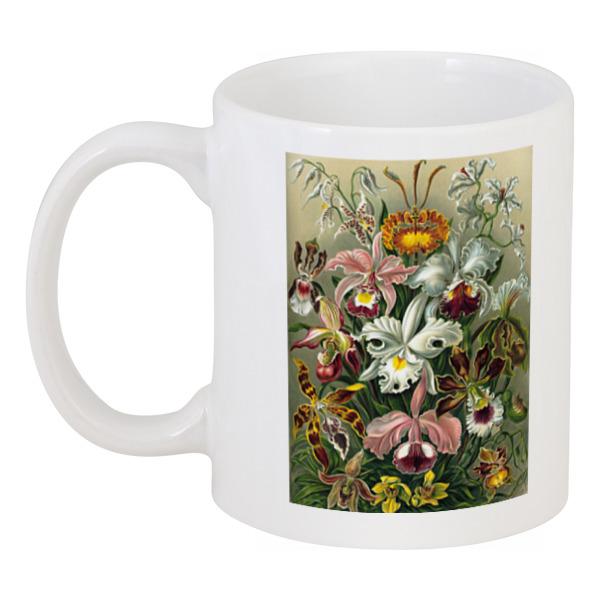 Кружка Printio Орхидеи (orchideae, ernst haeckel) кружка с цветной ручкой и ободком printio орхидеи orchideae ernst haeckel