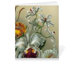 """Тетрадь на клею """"Орхидеи (Orchideae, Ernst Haeckel)"""" - картина, орхидея, день матери, красота форм в природе, эрнст геккель"""