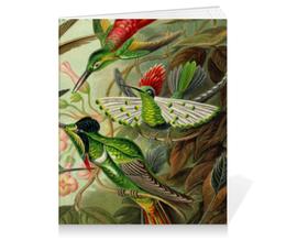 """Тетрадь на клею """"Колибри (Trochilidae, Ernst Haeckel)"""" - птицы, картина, колибри, день матери, эрнст геккель"""