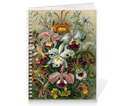 """Тетрадь на пружине """"Орхидеи (Orchideae, Ernst Haeckel)"""" - цветы, картина, орхидея, красота форм в природе, эрнст геккель"""