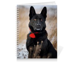 "Тетрадь на пружине ""Зимний пес"" - зима, собака, овчарка, овчар-команда, амир"