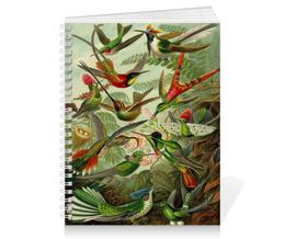 """Тетрадь на пружине """"Колибри (Trochilidae, Ernst Haeckel)"""" - 8 марта, колибри, день матери, красота форм в природе, эрнст геккель"""