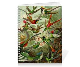 """Тетрадь на пружине """"Колибри (Trochilidae, Ernst Haeckel)"""" - птицы, картина, колибри, день матери, эрнст геккель"""