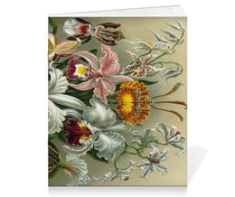 """Тетрадь на скрепке """"Орхидеи (Orchideae, Ernst Haeckel)"""" - цветы, картина, орхидея, красота форм в природе, эрнст геккель"""