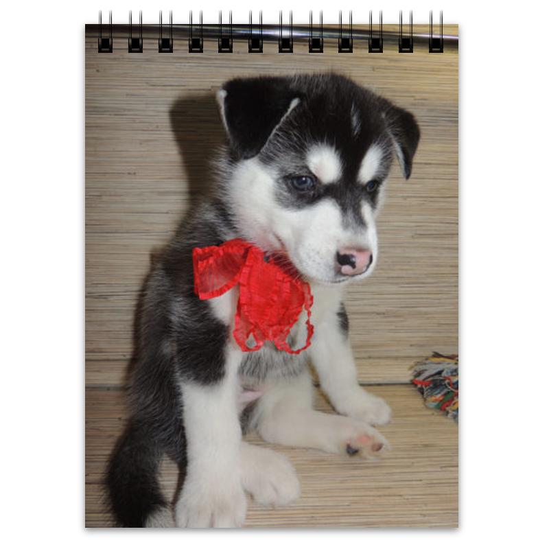 Блокнот Printio Сибирский хаски мягкие игрушки hansa собака породы сибирский хаски 40 см