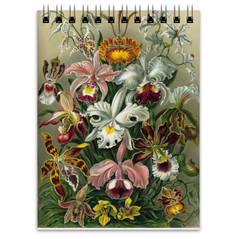Блокнот Printio Орхидеи (orchideae, ernst haeckel) самые дешевые орхидеи в москве