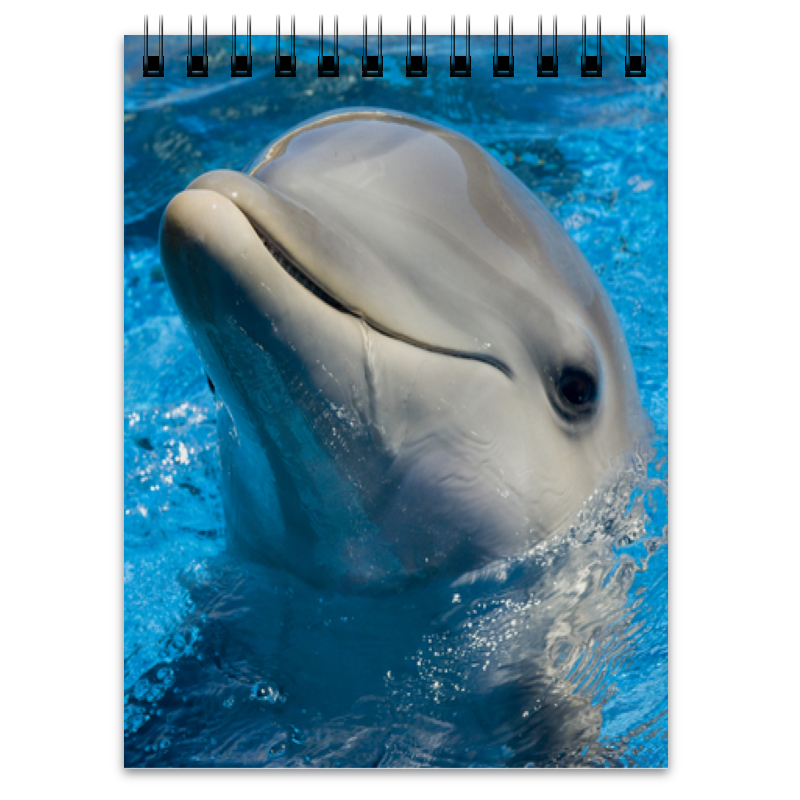 Блокнот Printio Дельфин 1