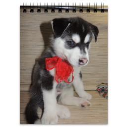 "Блокнот ""Сибирский Хаски"" - щенок, хаски, husky"