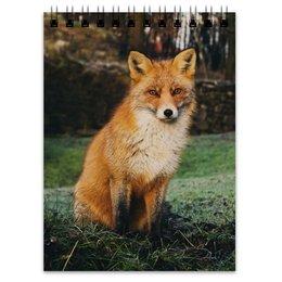 """Блокнот """"Лиса """" - животные, лиса, рыжая лиса, хитрая лиса, красивая лиса"""
