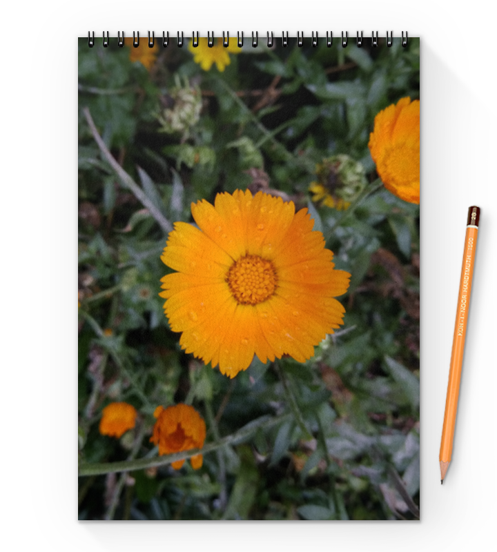 Printio Летние цветы цены