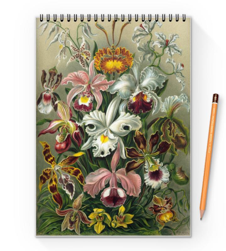 Блокнот на пружине А4 Printio Орхидеи (orchideae, ernst haeckel)