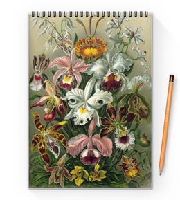 """Блокнот на пружине А4 """"Орхидеи (Orchideae, Ernst Haeckel)"""" - картина, орхидея, день матери, красота форм в природе, эрнст геккель"""