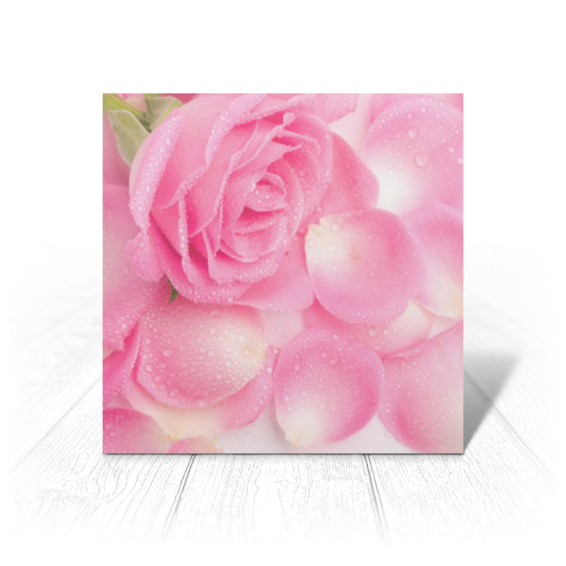 Открытка Printio Капли на розовых лепестках адин эвен исраэль штейнзальц роза о тринадцати лепестках