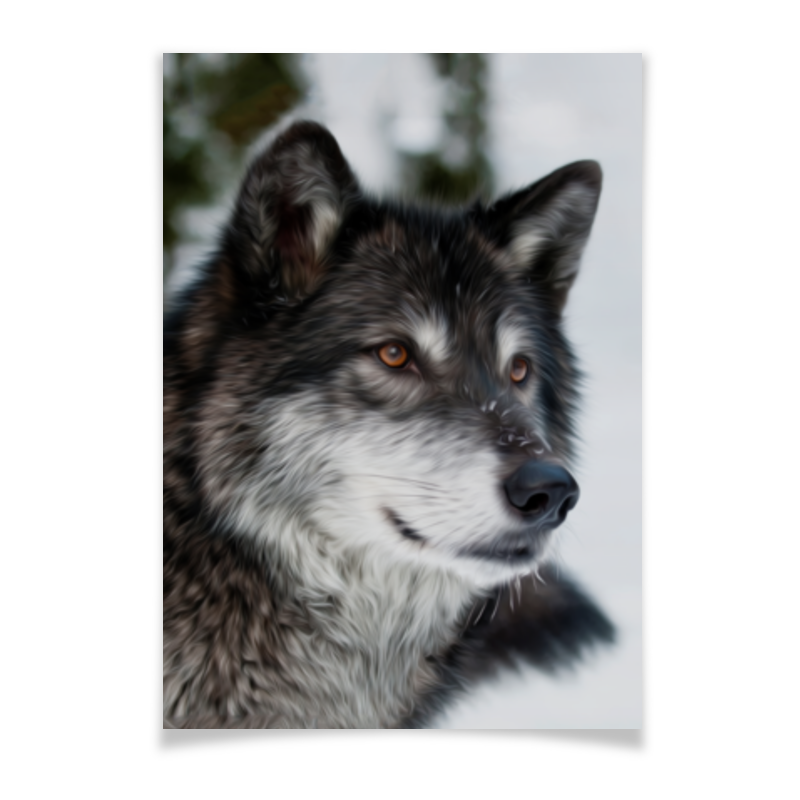 Плакат A3(29.7x42) Printio Серый волк ясон бадридзе волк проблемы связанные с реинтродукцией крупных хищных млекопитающих