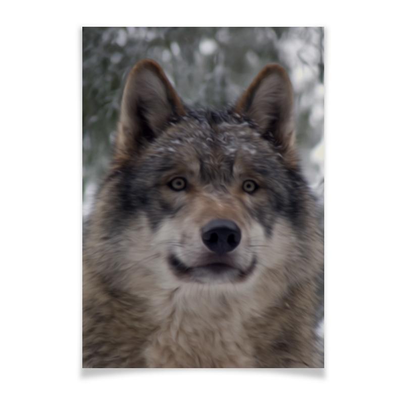 Плакат A3(29.7x42) Printio Волк в лесу чехол для ноутбука 14 printio волк в лесу