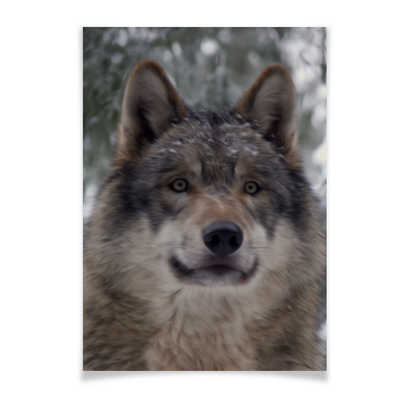 Плакат A3(29.7x42) Printio Волк в лесу сувенир волк