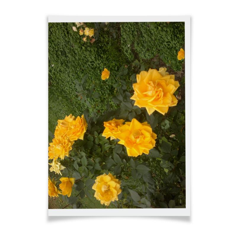 Плакат A3(29.7x42) Printio Осенние розы