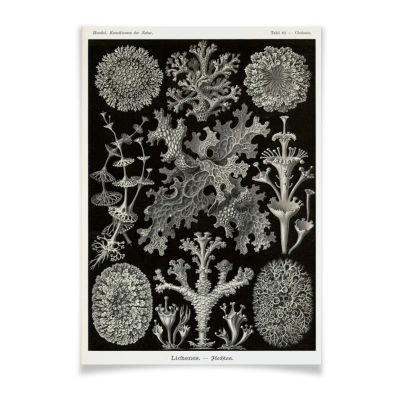 Плакат A3(29.7x42) Printio Лишайники (lichenes, ernst haeckel)